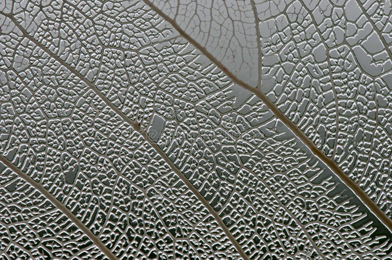 Leaf macro texture royalty free stock photography