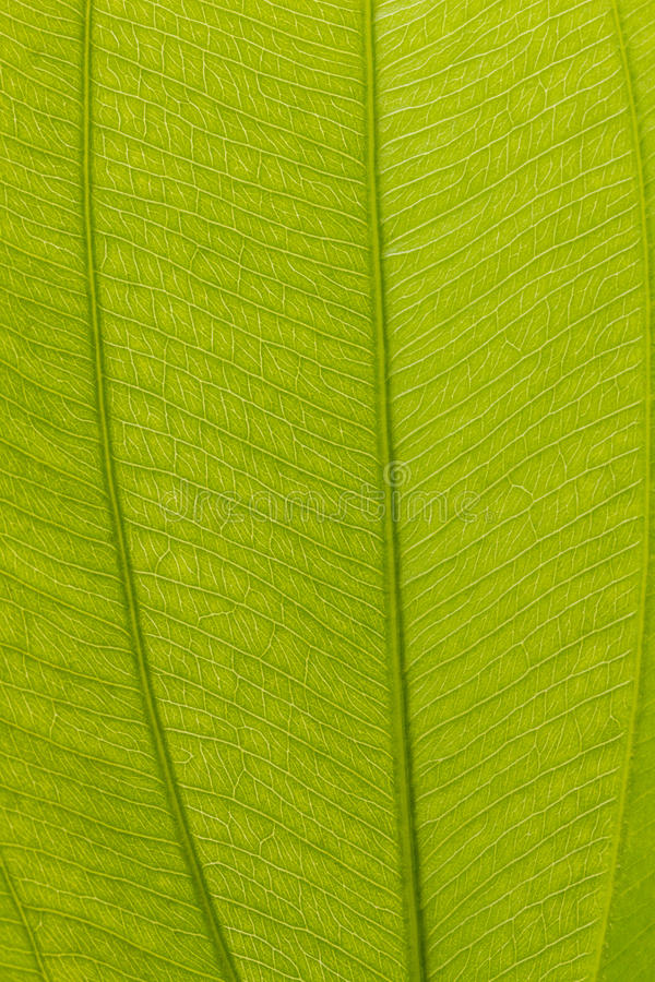 Download Leaf stock photo. Image of details, plant, foliage, nature - 32981270