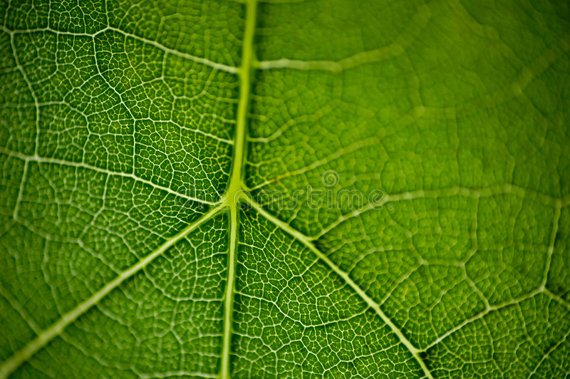leaf macro2 royaltyfri fotografi