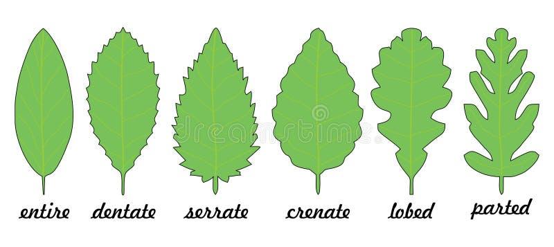 Leaf margin shapes stock illustration