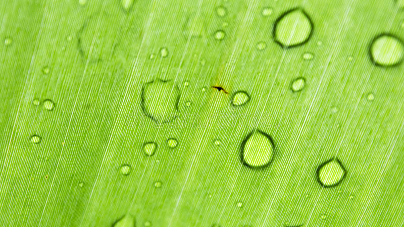 Leaf med raindrops arkivbild