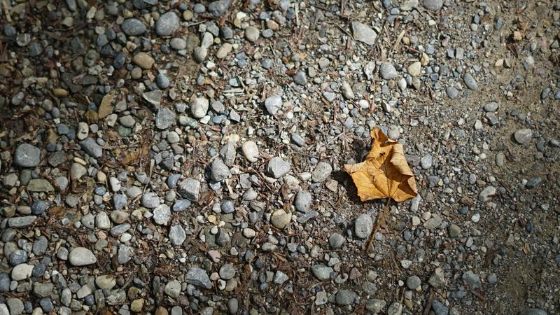 Leaf in the middle of nowhere. Leaf stuck alone in the middle of nowhere, next to rocks stock photo