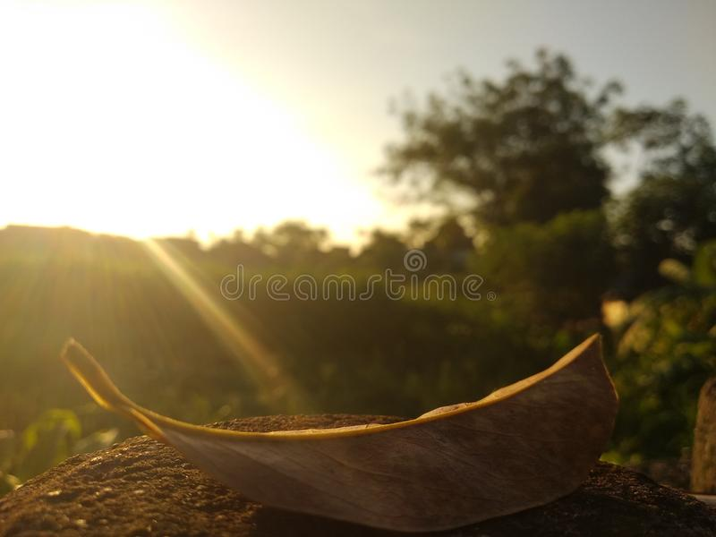 Leaf in The Morning royalty free stock photography