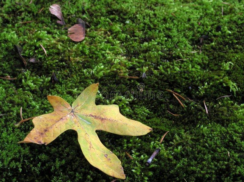 Download Leaf on Moss stock image. Image of forest, plush, soft, leaf - 33493