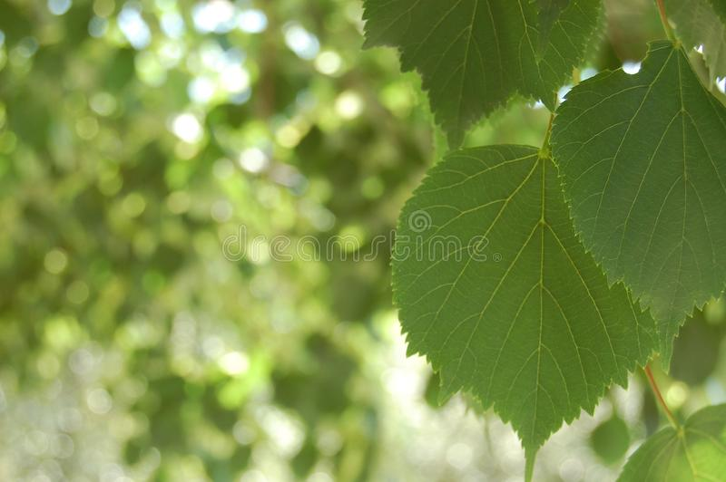 Leaf natural stock photography