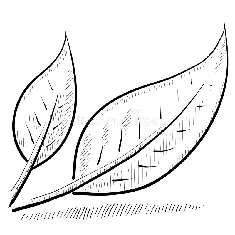 Download Leaf Or Nature Sketch Royalty Free Stock Photo - Image: 22337725