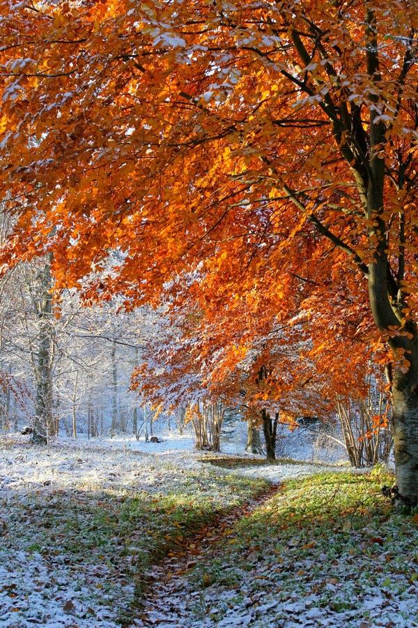Leaf, Nature, Tree, Autumn Free Public Domain Cc0 Image