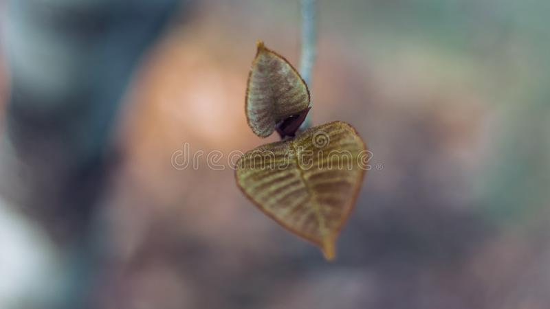 Leaf. New beginning season autumn summer winter water rain forest jungle india tree branch barown flower flowers colors bright nopeople focused stock photography