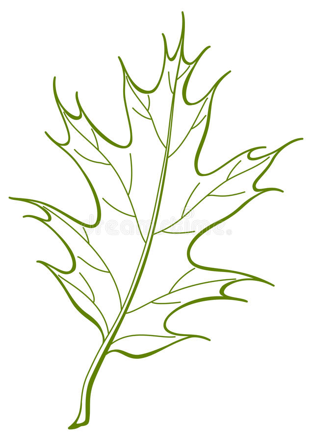 Download Leaf of oak Iberian, stock vector. Image of floral, organic - 17727951