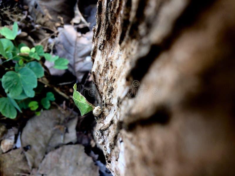 Leaf och tree royaltyfri fotografi