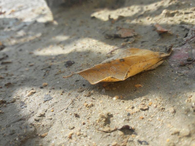 Leaf på slipat arkivfoton