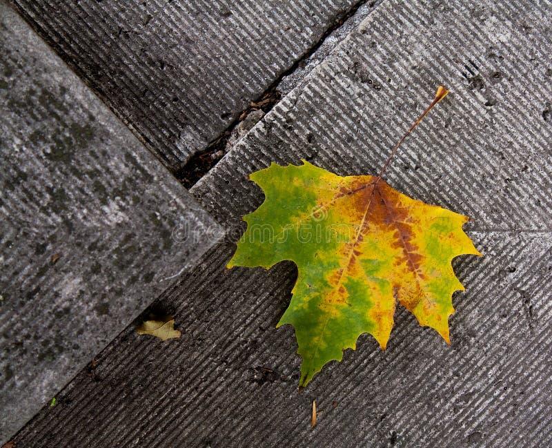 Leaf på stenen royaltyfri bild