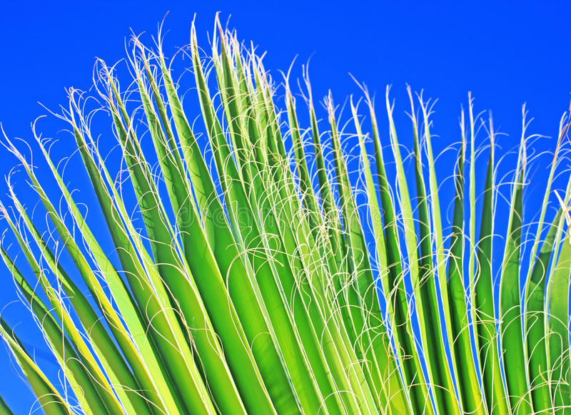 Leaf of a palm tree royalty free stock image