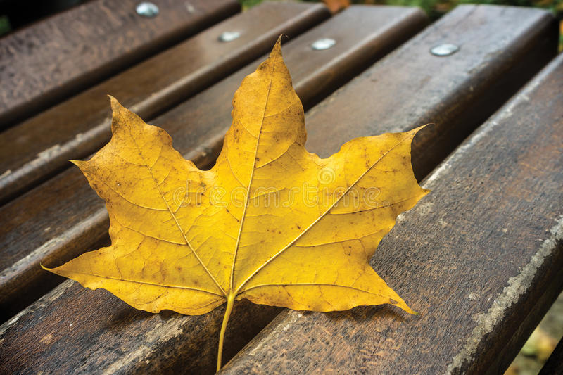 Leaf and Park Bench stock image
