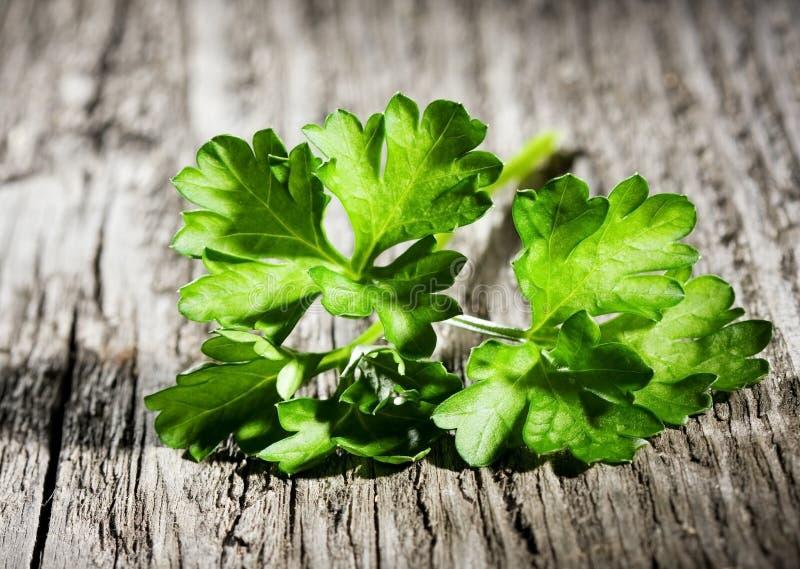 Leaf Of Parsley Stock Image