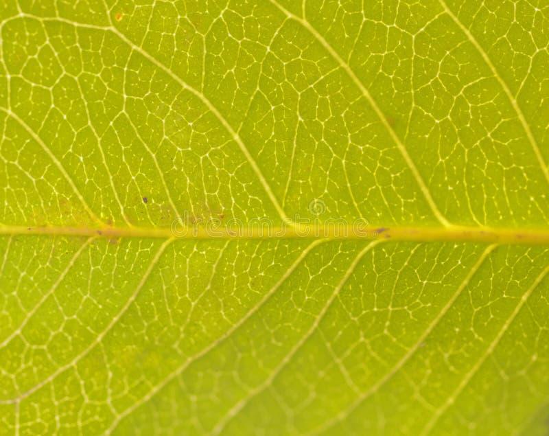 Download Leaf pattern stock image. Image of nature, color, colour - 11979093