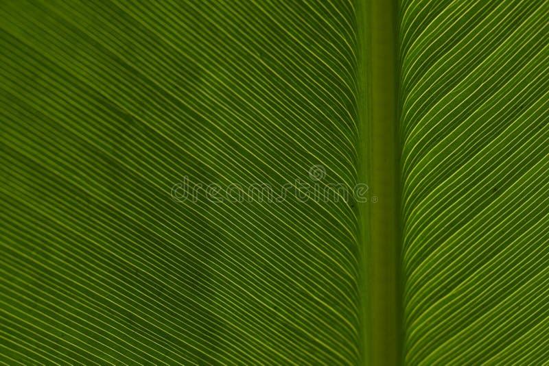 Download Leaf Pattern 2 stock photo. Image of botanic, leaf, lines - 323088