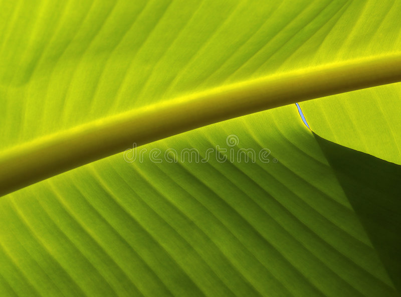 Download Leaf Pattern Royalty Free Stock Photos - Image: 2319488