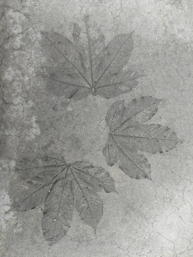 Leaf pattern, cement floor stock photo