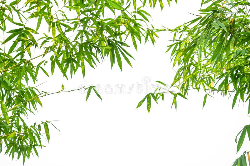 Leaf pattern leaves bamboo or abstract background . Green Energy royalty free stock images