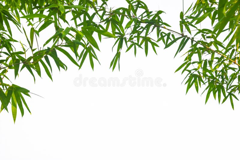 Leaf pattern leaves bamboo or abstract background . Green Energy stock images