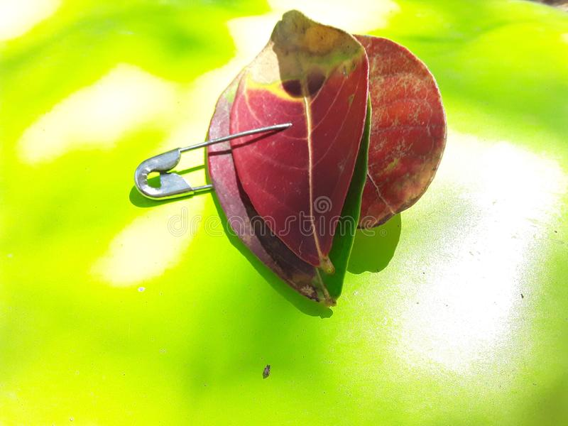 leaf, pin, colorful stock images