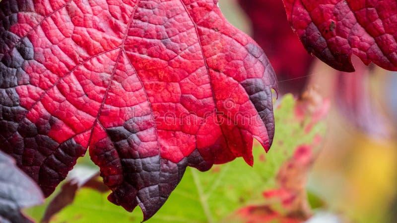 Leaf, Pink, Flora, Plant Free Public Domain Cc0 Image
