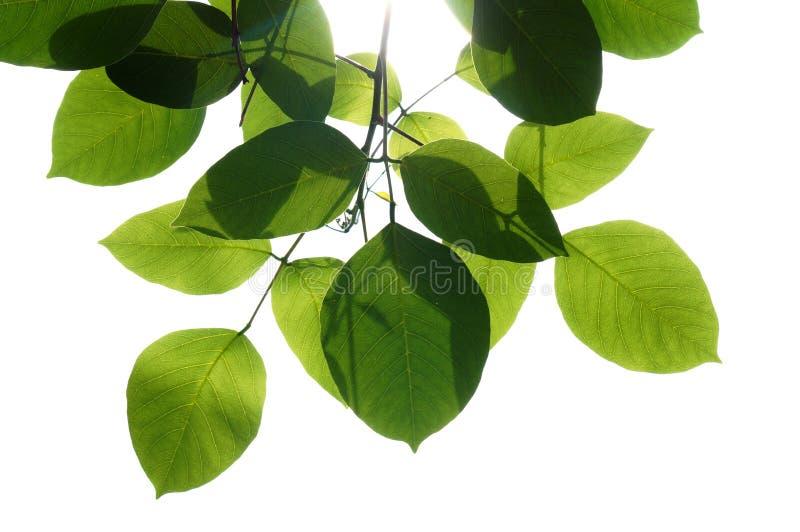 Leaf, Plant, Branch, Tree Free Public Domain Cc0 Image