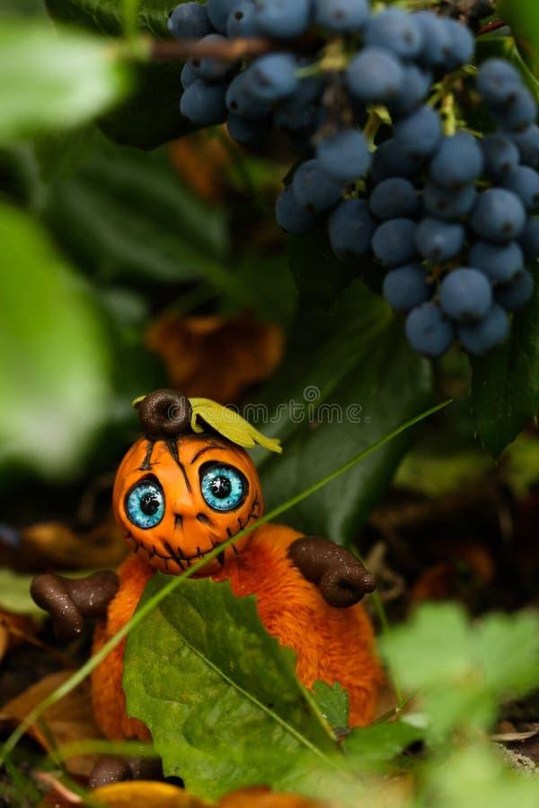 Leaf, Plant, Close Up, Fruit stock photo