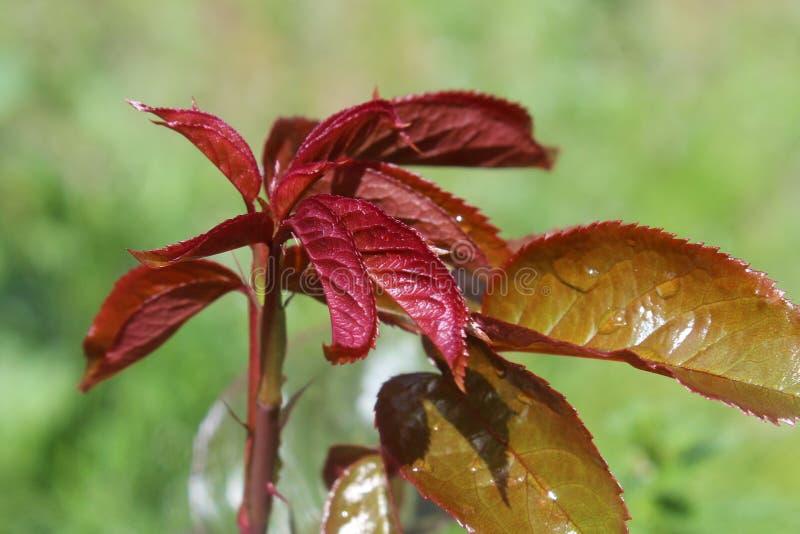 Leaf, Plant, Flora, Plant Stem Free Public Domain Cc0 Image