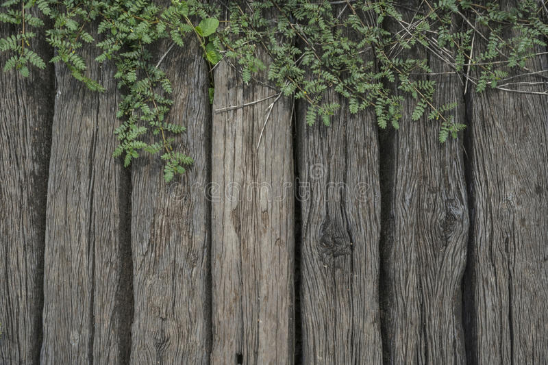 Leaf plant over wood fence royalty free stock image