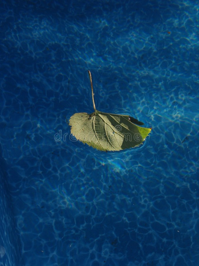 Download Leaf in a Pool stock photo. Image of cool, blue, nature - 28310