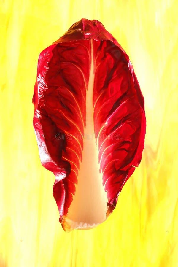 Download Leaf of Radiccio stock photo. Image of salad, tiffany - 35969226