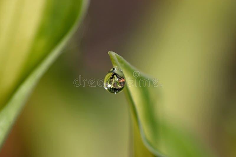 leaf raindrop στοκ εικόνες