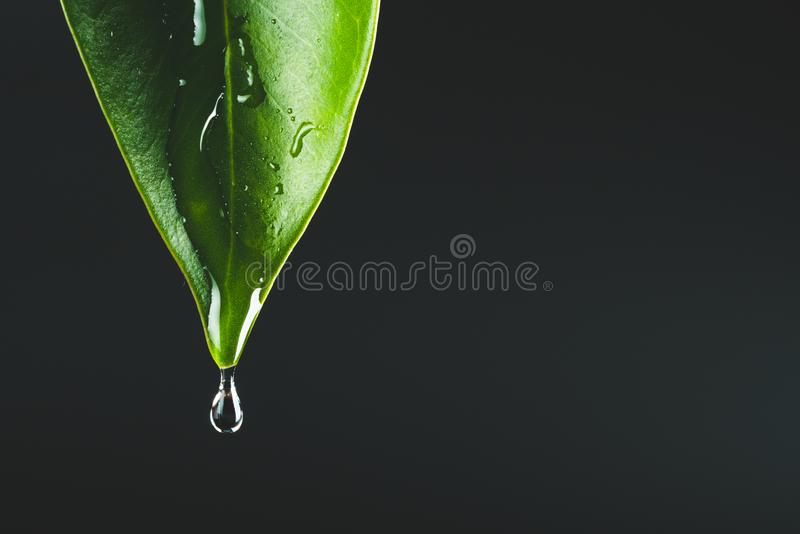 Green leaf and raindrop. Leaf and raindrop on black background royalty free stock image