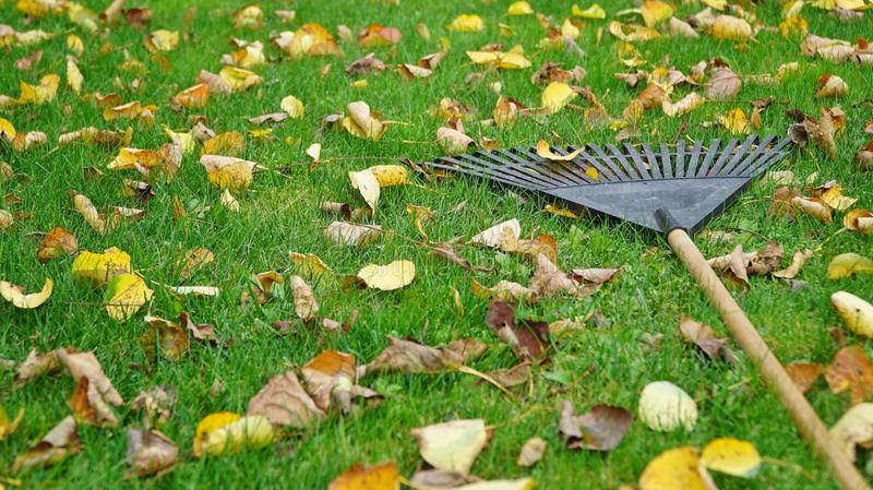 Leaf rake royalty free stock photography
