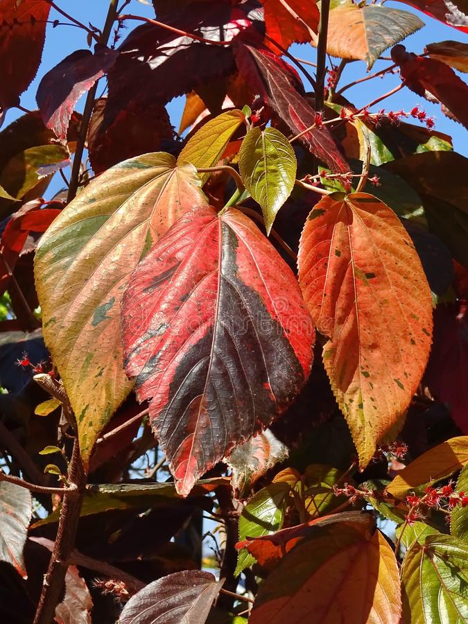 Leaf, Red, Plant, Autumn stock photo