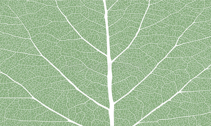Leaf with ribs royalty free stock photography