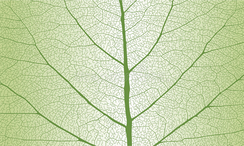 Leaf with ribs stock photo