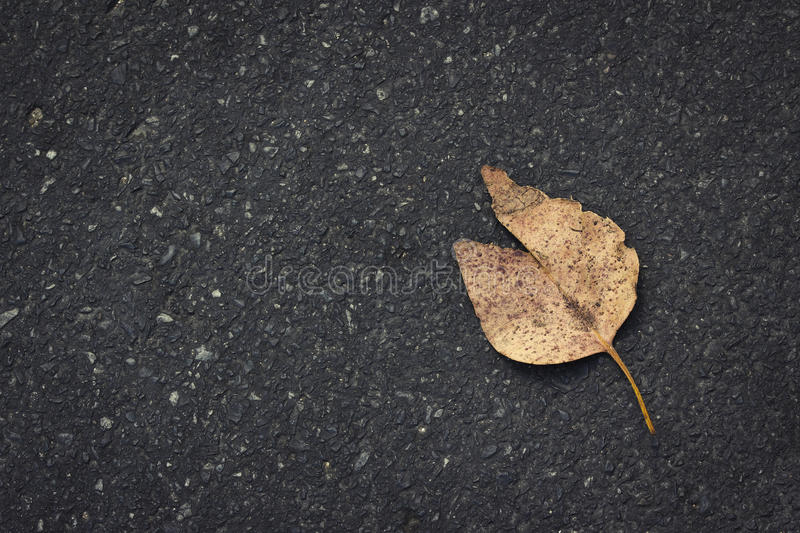 Download Leaf On Road Royalty Free Stock Photo - Image: 28928845