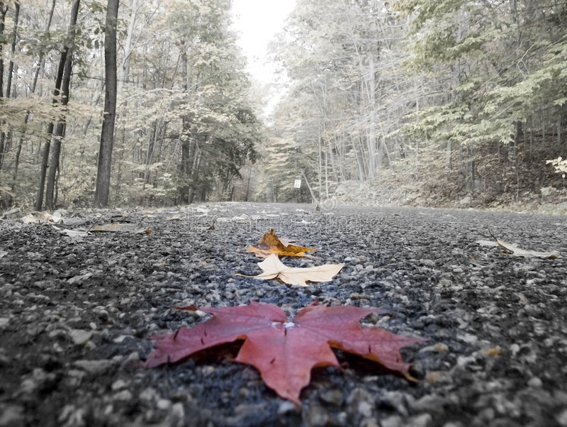 Leaf on road stock photos