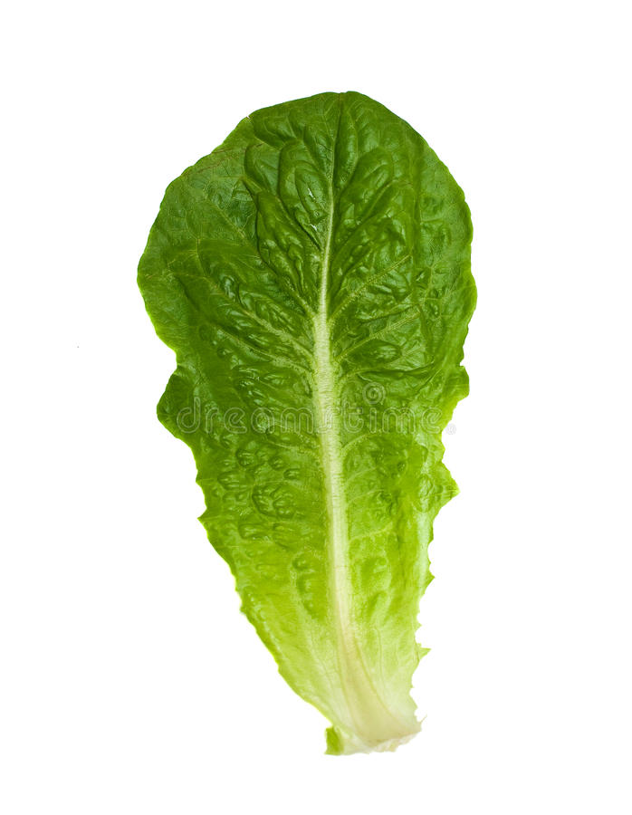 Leaf Of Romaine Salad. Leaf of green romaine salad, isolated on white background royalty free stock photography