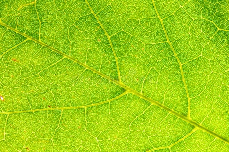 Leaf& x27; s Texturen stock afbeeldingen