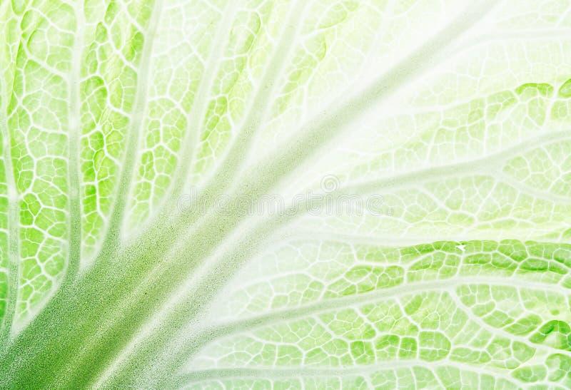 Leaf of salad stock image