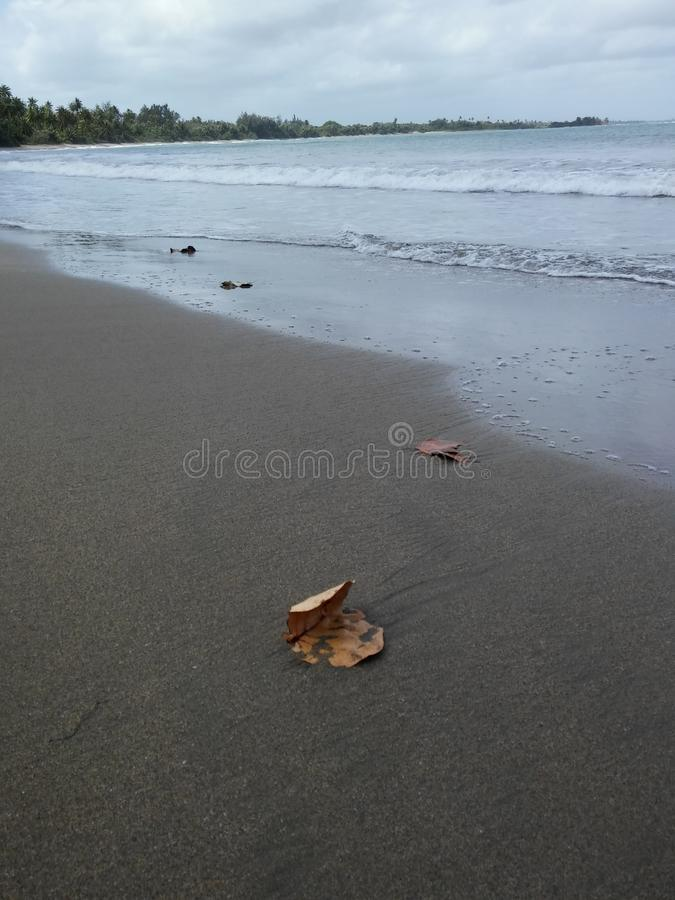 Leaf in the Sand royalty free stock image