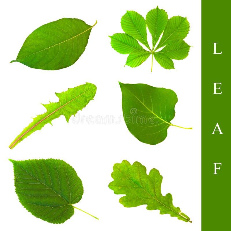 Download Leaf set stock photo. Image of arrangement, collection - 13743736