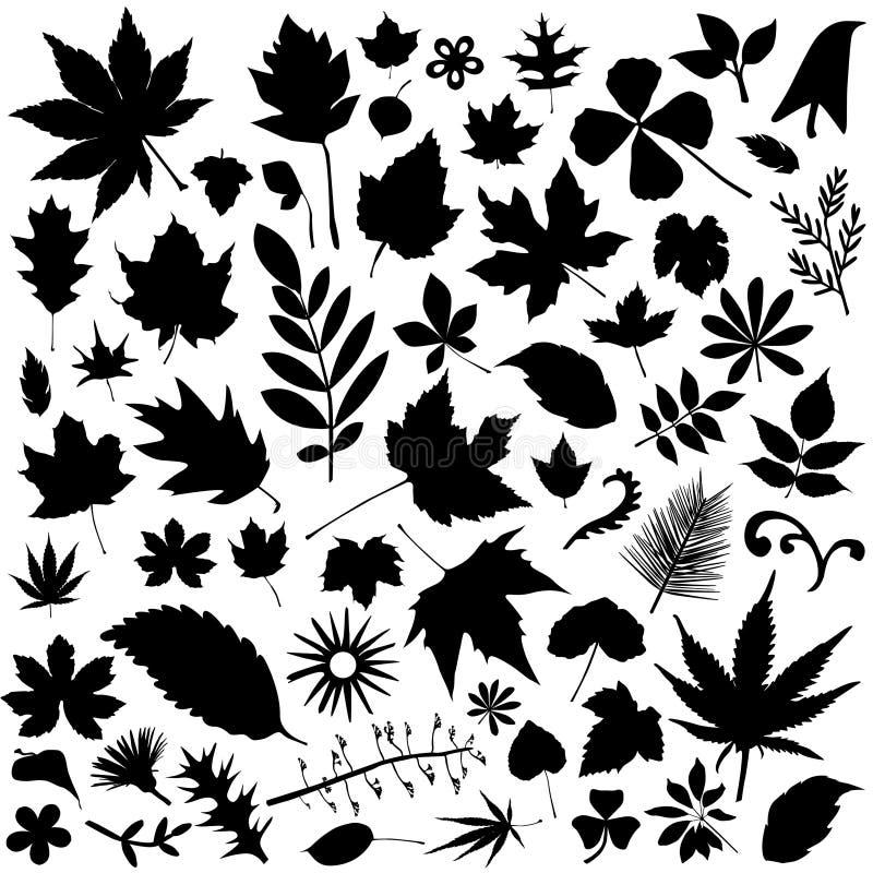 Leaf set. Set of leaf silhouettes vector vector illustration