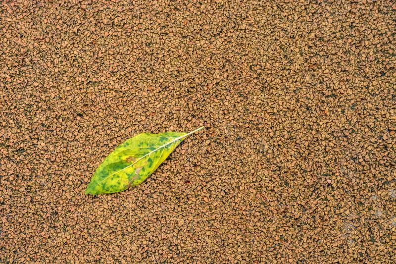 Leaf on the sidewalk. royalty free stock images