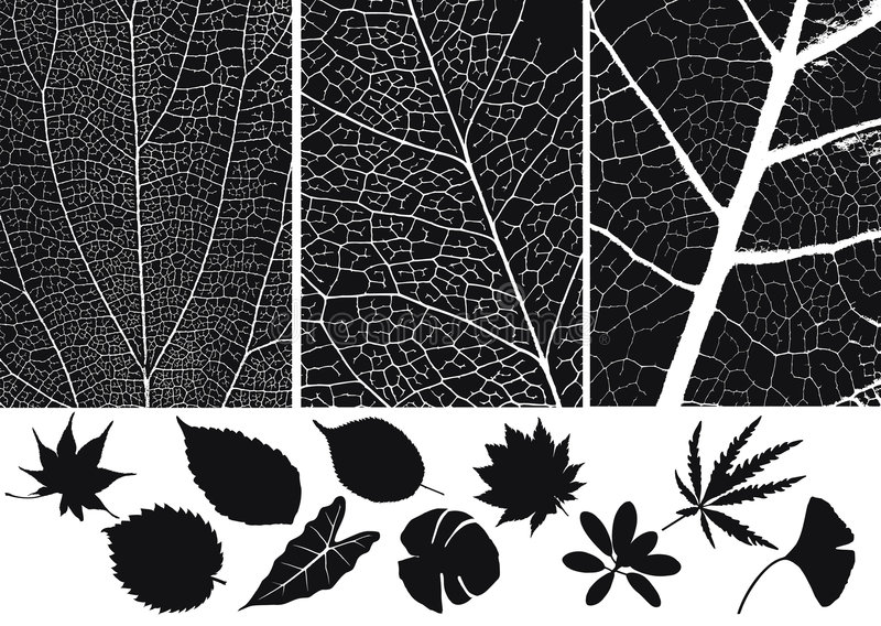 Leaf silhouette. Set of leaf silhouette and texture of leaf vector illustration