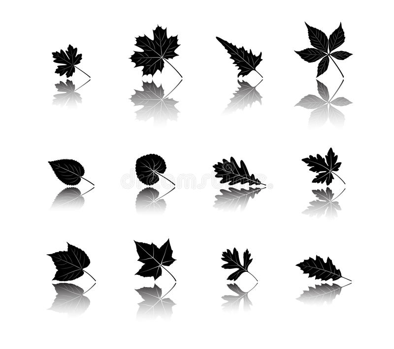 Leaf silhouettes with reflection